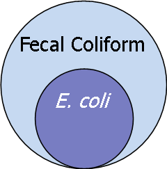 EcoliFecalColiform
